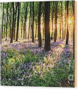 Sunrise Path Through Bluebell Woods Wood Print