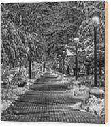 Path Through Eastern Wood Print