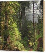 Path Through Redwood Forest Wood Print