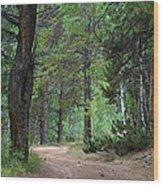 Path Through The Pines - Casper Mountain - Casper Wyoming Wood Print