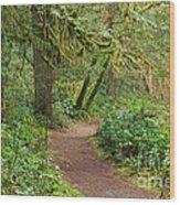 Path Through The Rainforest Wood Print