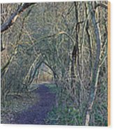 Path Through The Woods Wood Print