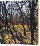 Path Thru The Oaks Wood Print by David Taylor