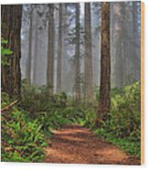 Path Thru The Redwoods Wood Print