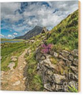 Path To Lake Idwal Wood Print by Adrian Evans