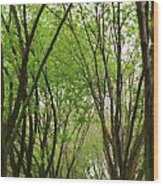 Pathway At St Louis Arch Wood Print
