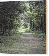 Pathway Through The Forest Wood Print