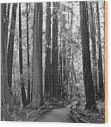 Pathway Through The Trees Wood Print