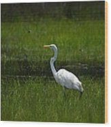 Patience - Egret Wood Print