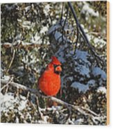 Patient Cardinal Wood Print