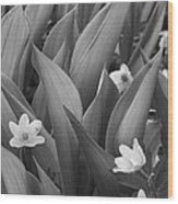 Pattern Of Flowers And Leaves - Monochrome Wood Print