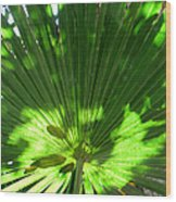 Green Plant Pattern Wood Print
