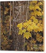 Patterns Of Fall Wood Print