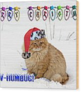 Paw Humbug Wood Print by Robyn Stacey