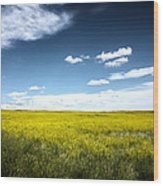 Pawnee Grasslands Wood Print