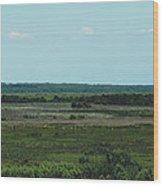 Payne's Prairie Wood Print