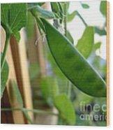 Pea Pod Growing Wood Print