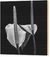 Peace Lilies Wood Print