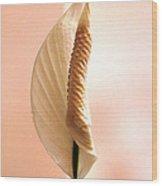 Peace Lily Awakening Wood Print