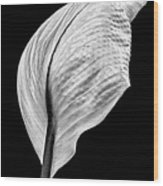 Peace Lily IIi Wood Print