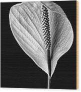 Peace Lily Iv Wood Print