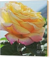 Peace Rose Kissed By The Sun Wood Print