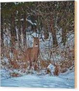 Peace Valley Park Deer Wood Print