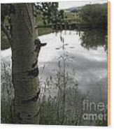 Peaceful Aspen With Pond And Clouds Wood Print