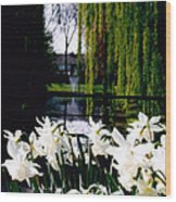Peaceful Canal Wood Print