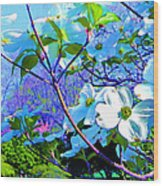 Peaceful Dogwood Spring Wood Print