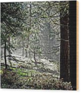 Peaceful Morning Wood Print