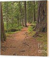 Peaceful Path To Cheakamus Lake Wood Print