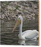 Peaceful Pelican Wood Print
