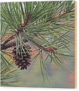 Peaceful Pinecone Wood Print by Stephen Melcher