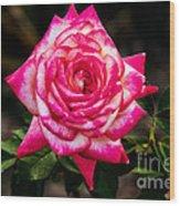 Peaceful Rose Wood Print