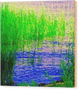 Peaceful Stream  Quebec Landscape Art Tall Grasses At The Lakeshore Waterscene Carole Spandau Wood Print