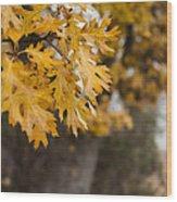 Peacefull Fall Walk Wood Print