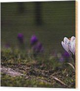 Peacefully  Wood Print