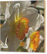 Peach And Cream Daffodil Wood Print