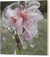 Peach Blossom In Ice Wood Print