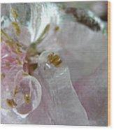 Peach Blossom In Ice Three Wood Print