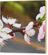 Peach Blossoms 2 Wood Print