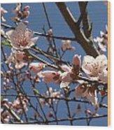 Peach Blossoms Wood Print