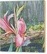 Peach Canna By The Pond Wood Print by Patricia Allingham Carlson