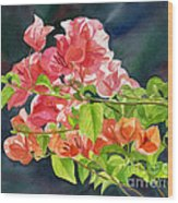 Peach Colored Bougainvillea With Dark Background Wood Print by Sharon Freeman