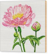 Peach Colored Peony With Buds Wood Print
