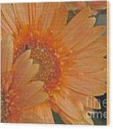 Peach Daisy Cluster Wood Print