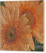 Peach Daisy Wood Print