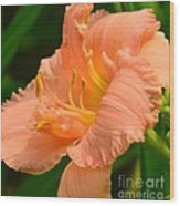 Peach Day Lilly Wood Print