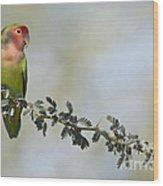 Peach Faced Love Bird Wood Print